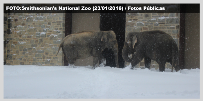 Nevasca não perdoa animais em Zoo